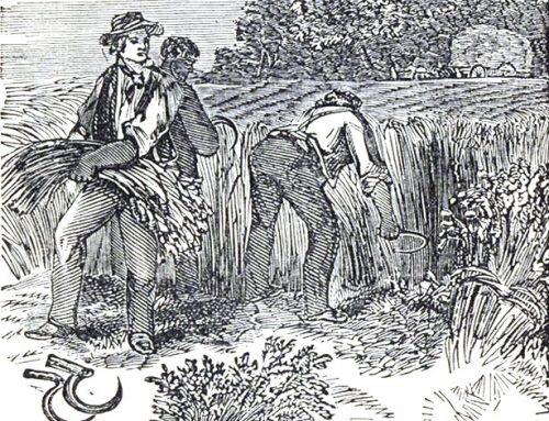 Breve storia del grano
