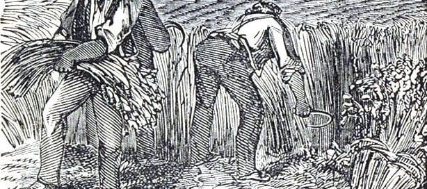 wheat history