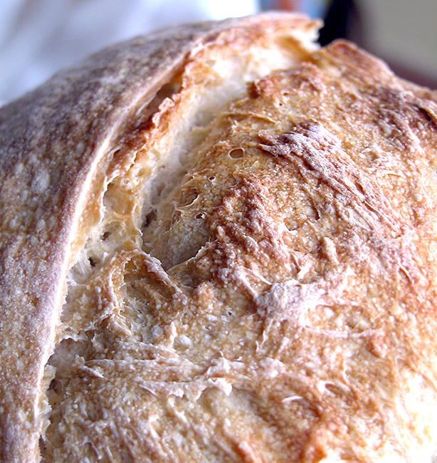 pane fatto in casa ricetta