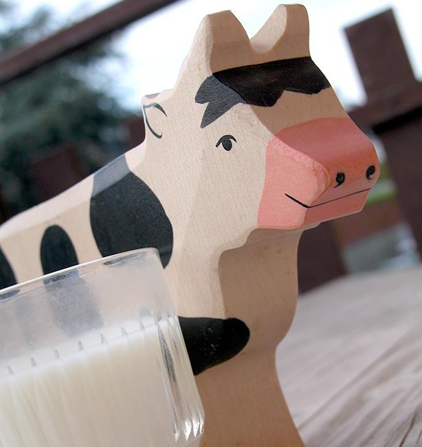 latte da vacche al pascolo