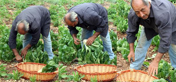 azienda agricola Bio&Sisto