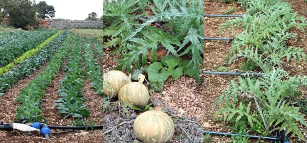 azienda agricola bio Tortorella