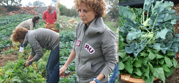 raccogliamo le piante per l'insalata