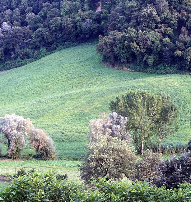 grass, soil, hope