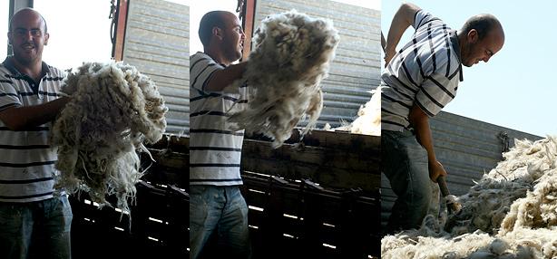 lana di pecora sarda grezza