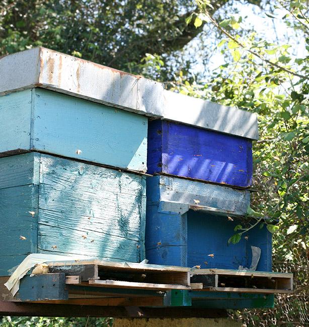 apicoltura monte funicolo