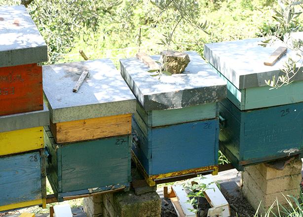 apicoltura bio lazio