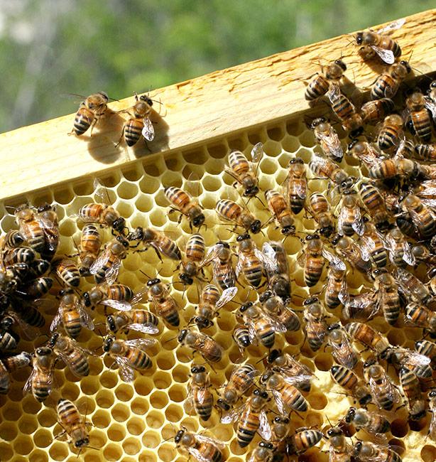 miele monte funicolo