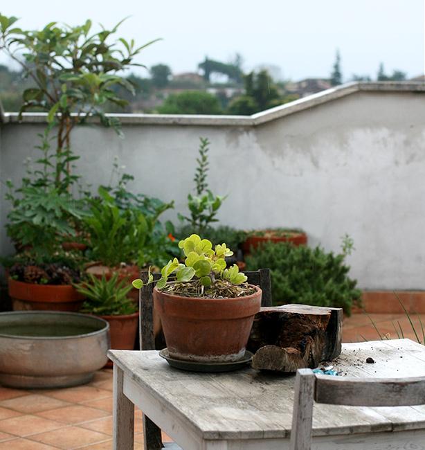 piante da frutto su terrazzo