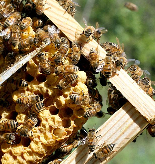 Monte Funicolo apicoltura