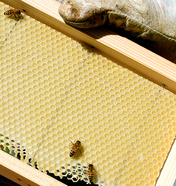 miele biologico certificato