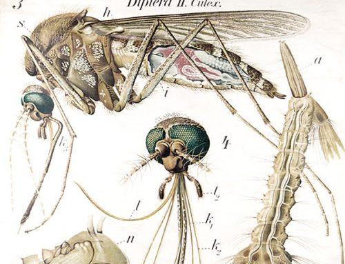 La dieta anti-zanzare