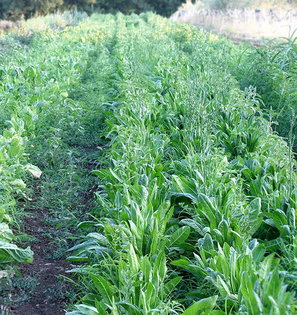 coltivazioni bio roma