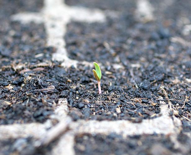 semenzaio materiale naturale
